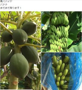 facebook-banana